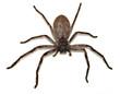 Leinwanddruck Bild - Big Fat Spider