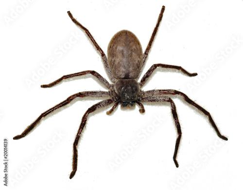 Leinwanddruck Bild Big Fat Spider