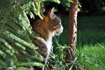 Getigerte Katze sitzt im Günen und schaut