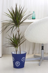 Home plants in plant pots in the interior