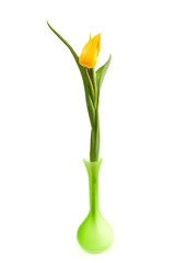 one single yellow Dutch Tulip over white background