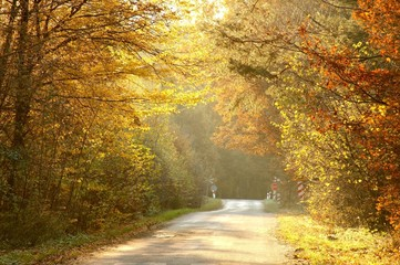 Rays of the setting sun backlit autumn forest road