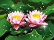 Lotus flowers on water and shining stars