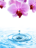 Wassertropfen fällt von der Orchidee ins Wasser