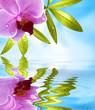 Wellness Motiv mit Spiegelung