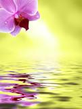 Orchidee spiegelt sich im Wasser