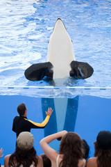 Adiestrador de orcas