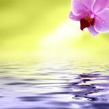 Schöne Spiegelung der Orchidee im Wasser