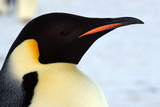 Fototapete Vögel - Antarktis - Eiswüste