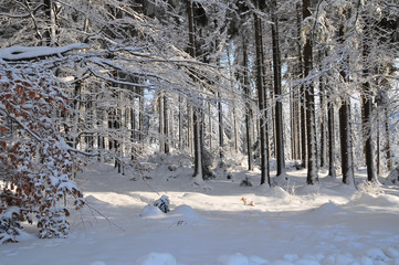 Winter Schee Landschaft Wald