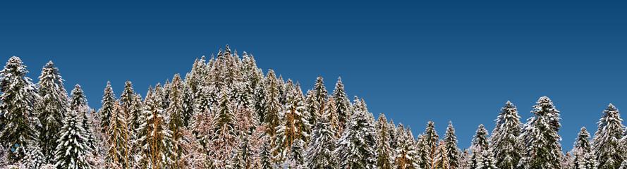 forêt de mélèzes enneigée par beau temps