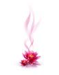Fleurs et Parfum