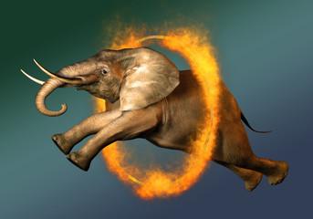 Elefantensprung