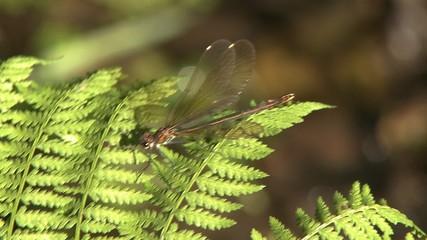 Dragonfly on leaf in swamp