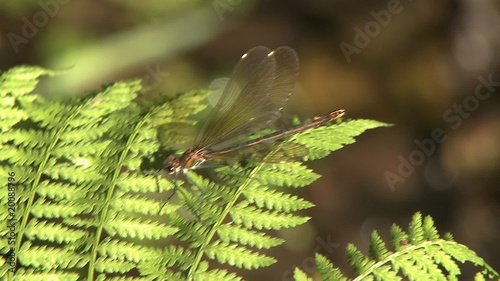 Dragonfly on leaf in swamp
