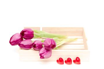 the fresh purple tulips isolated on white