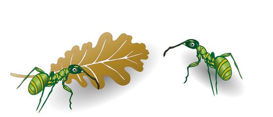 Ameise, Ameisen