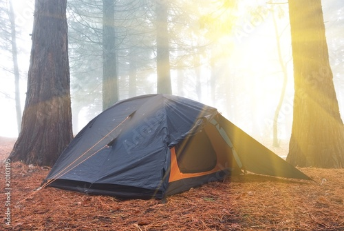 touristic tent in a morning forest