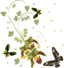green orchids and three butterflies