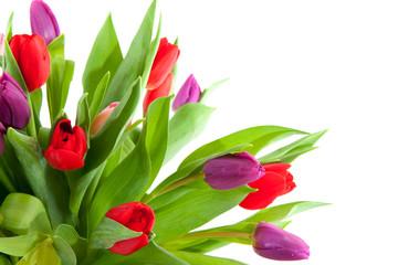 Colorful tulips in corner