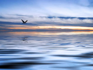 el mar y la gaviota