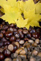 Acorns, conkers and autumn leaves, close-up