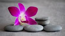 fleur d'orchidée rose fushia galets et