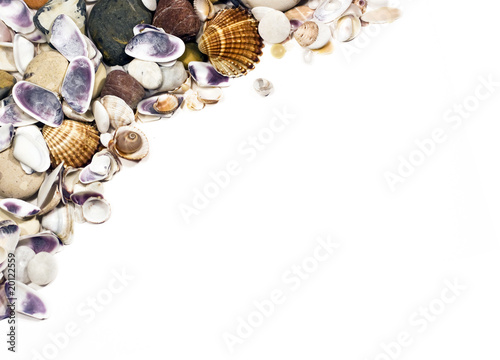 eashells on white with a lot of copy space