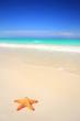 Leinwanddruck Bild - Starfish on tropical beach