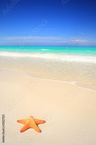 Leinwanddruck Bild Starfish on tropical beach