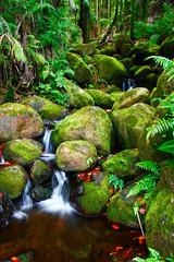 Small creek in the jungle of Big island. Hawaii. USA