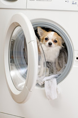 washing machine and dog inside