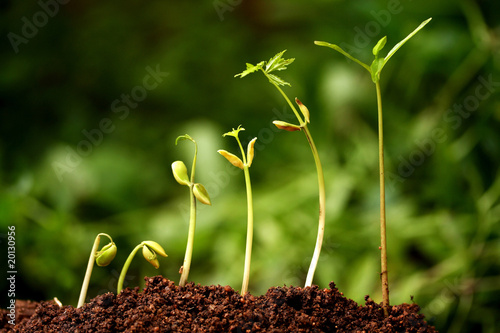 Six seedlings growing from soil