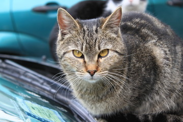 occhi di gatto 2