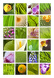 Jardin, fleurs, plantes et nature