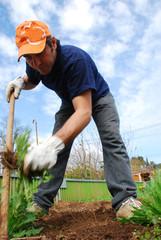 Homme qui jardine.