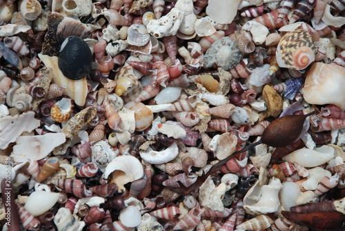 Seashells - Seashell Beach, Berrara, NSW Australia -2