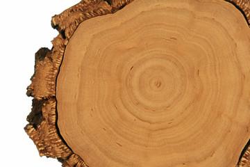 Holz-Struktur: Baumscheibe mit dicker Borke