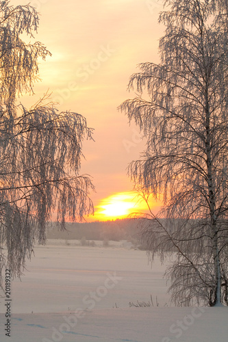 Snowy winter with sunset and trees
