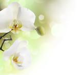 Fototapeta granica - na białym tle - Roślinne