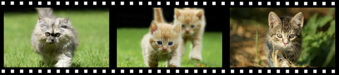 Filmstreifen Katzen