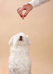 giving treat to dog