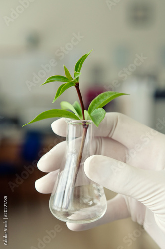 Hand in glove holding a test tube with plant
