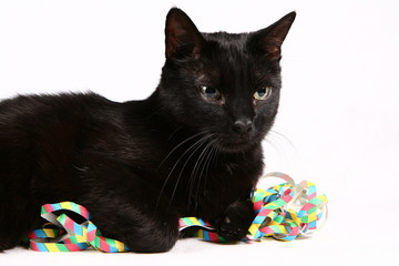 Black cat with colorful streamers on white background