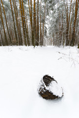 Basket in Winter Forest