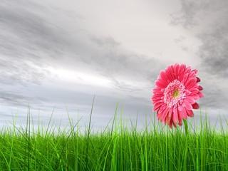 High resolution pink flower in green grass with gray sky