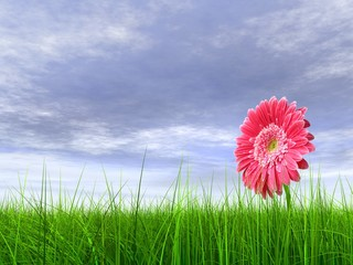 High resolution pink flower in green grass with blue sky