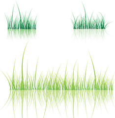 Set of grass. Vector