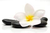 Fototapeta czarny - kwiat - Kwiat