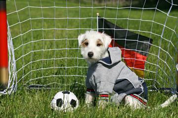 hundefussball